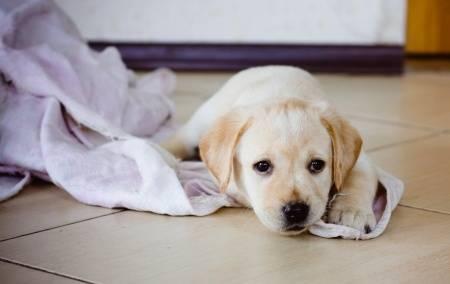 puppy in a blanket