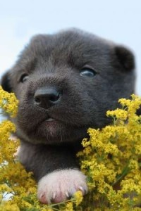 young puppy on yellow flowers
