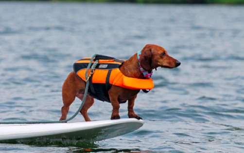 Best life vest for dachshunds