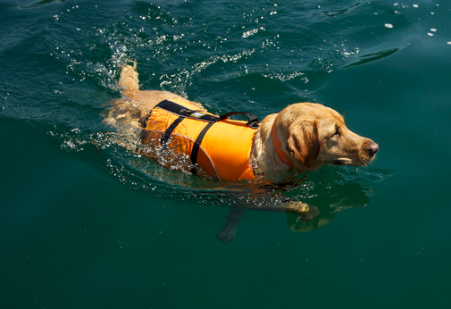 Kyjen outward hound life jacket review