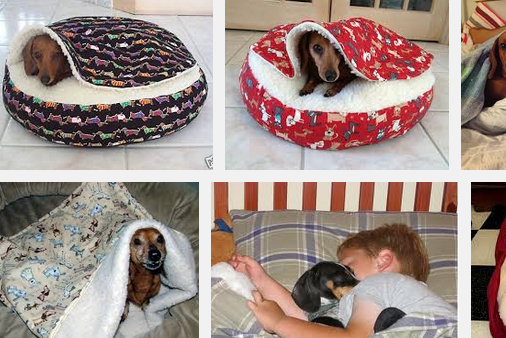dachshunds dog bed buying guide