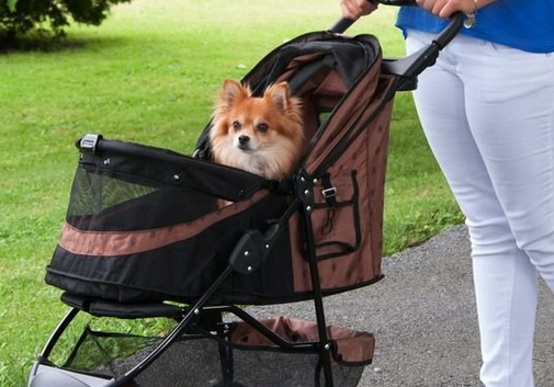Best Dog stroller for Corgi