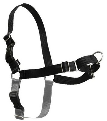 dog harness for shih tzu