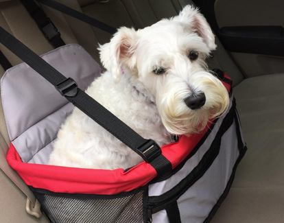 dog booster seat reviews