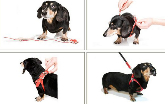 bb2 dog harness review