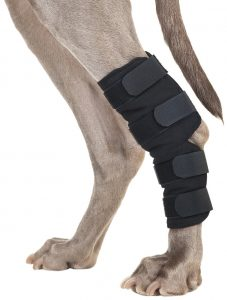 Can A Torn Acl Heal Itself In Dogs