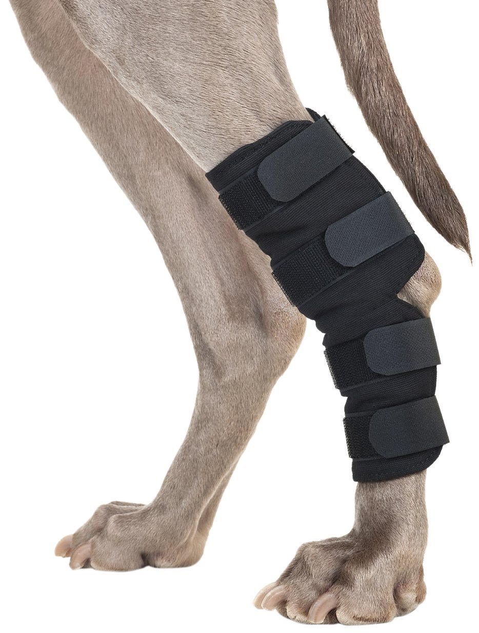 how to tell if dog acl is torn