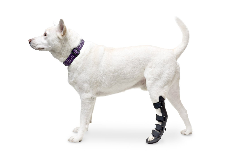 Dog Splint Review