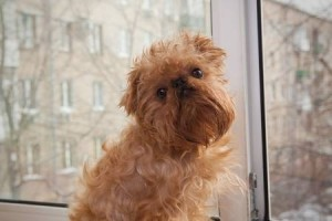 Ways To Eliminate Pet Hair & Dander In The Air At Home