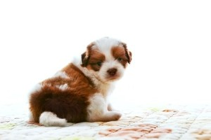 Tips on Preparing Your Home for a New Puppy