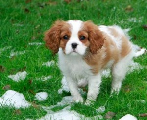 What To Know About Housebreaking A Puppy