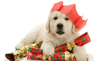 Are Puppies Good Christmas Gifts?