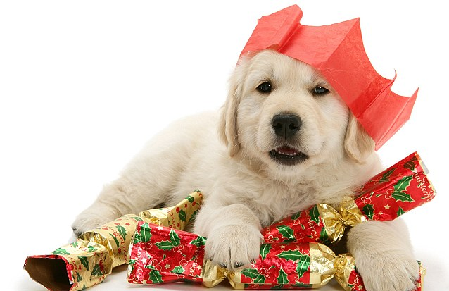 are puppies good christmas gifts