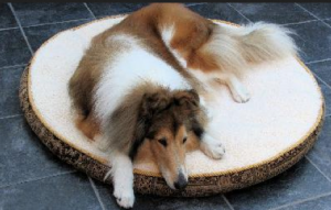 Best dog bed for collie