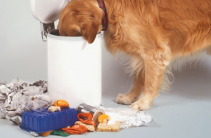 How to keep dog out of trash – 4 surefire methods