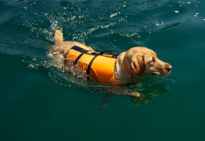 How the Kyjen outward hound life jacket saved my dog's life: an honest review