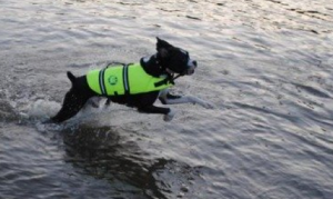 Kyjen vs Paws Aboard dog life jacket: which is the best