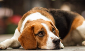 Proven remedies for dog upset stomach
