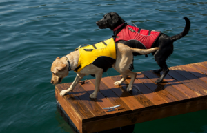 Best dog life jacket for swimming: reviews of my top 3 brands