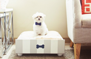 My top picks – best dog bed for big, middle and small dogs