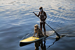 How to train a dog for paddle board?
