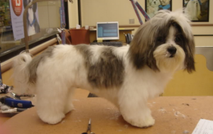 Best dog clippers for Shih Tzu hair