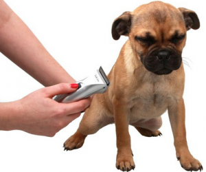 How to maintain dog clipper blades: 4 tips you must know