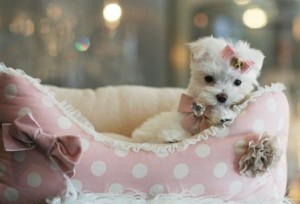 Which brands has the best dog bed for Maltese?