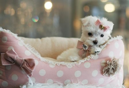 Which Brands Has The Best Dog Bed For Maltese