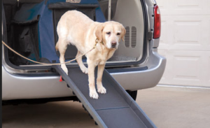 Best dog ramp for labrador