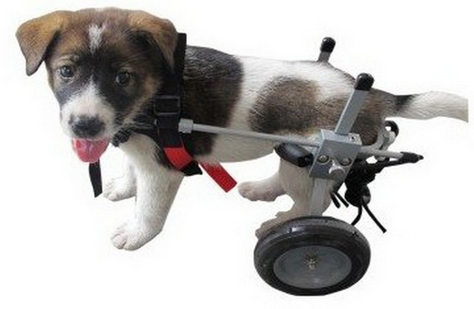 best wheelchair for Corgi