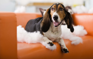 5 tips on how to dog proof your home