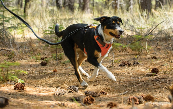 Best harness for dogs with collapsed trachea