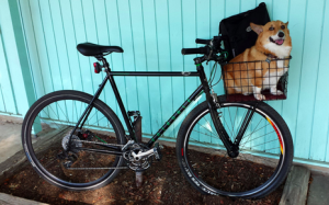 How to take dog on bike ride – 3 practical ways