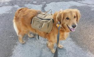 Onetigris dog hiking backpack review