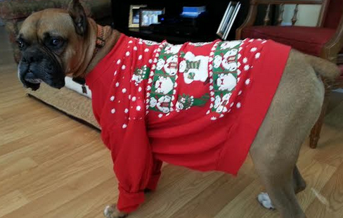ugly boxer dog sweaters 1