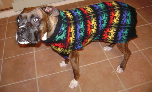 ugly boxer dog sweaters 2