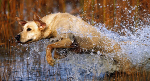 Fun water activities for dogs
