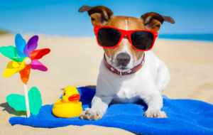 How to keep a dog cool at the beach