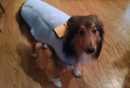 best dog cooling coat