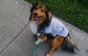 What is the best dog cooling pad and coat?