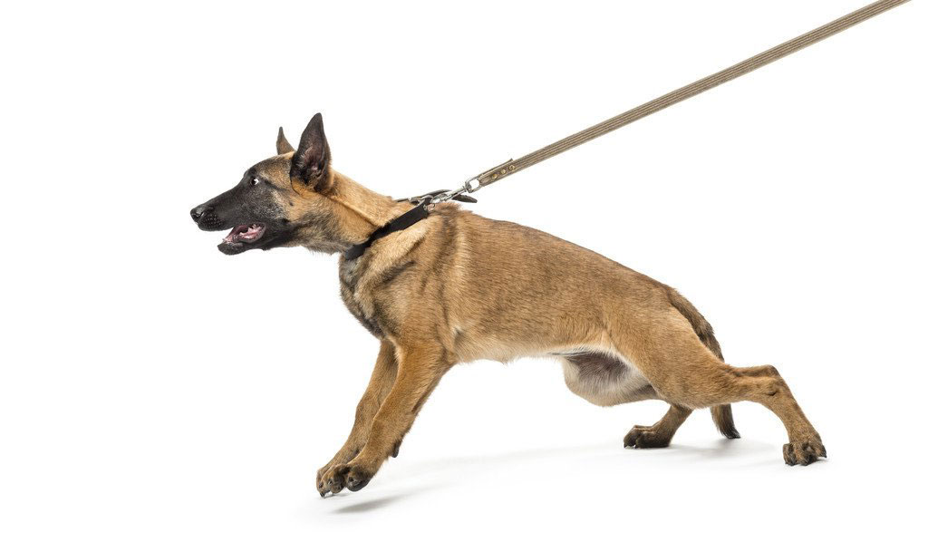 How To Help Your Dog Stop Coughing After Leash Pulling