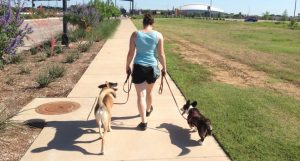 Benefits of Positive Reinforcement Training for Loose Leash Walking