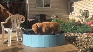 Find the Best Swimming Pool for Dachshunds