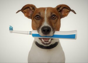 The Best Dog Food For Cleaning Teeth